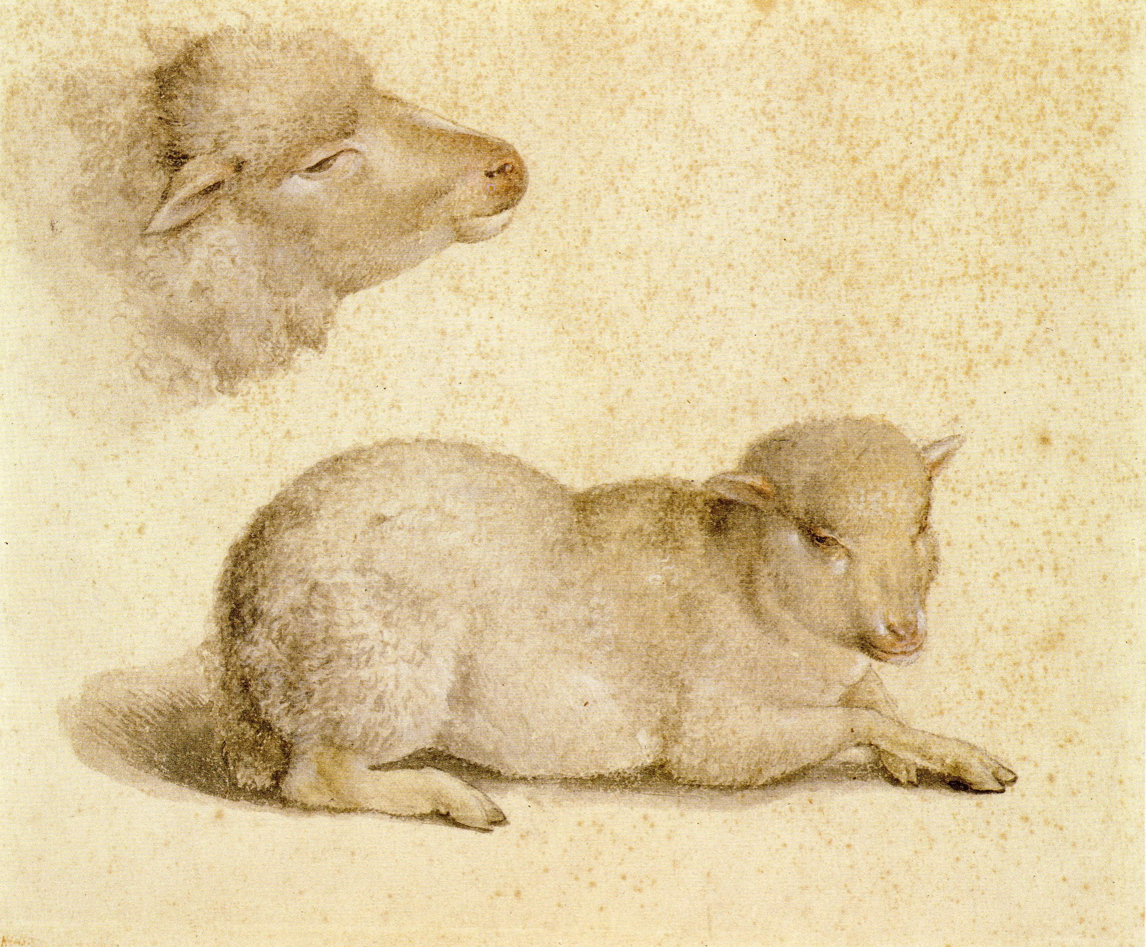 Study of Resting Lamb and Head of Lamb. c.1523