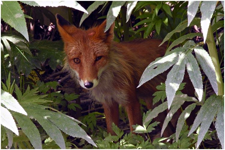 fox-06-2013-01