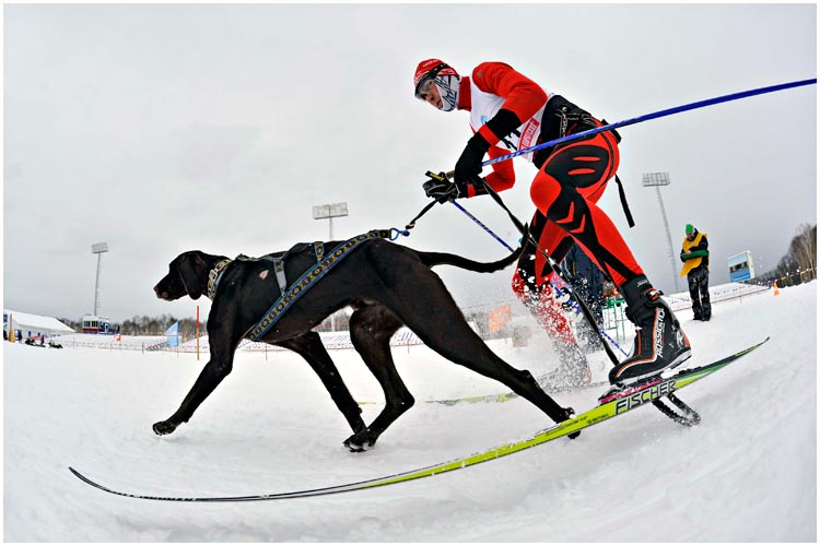 dog-race-01-2013-09