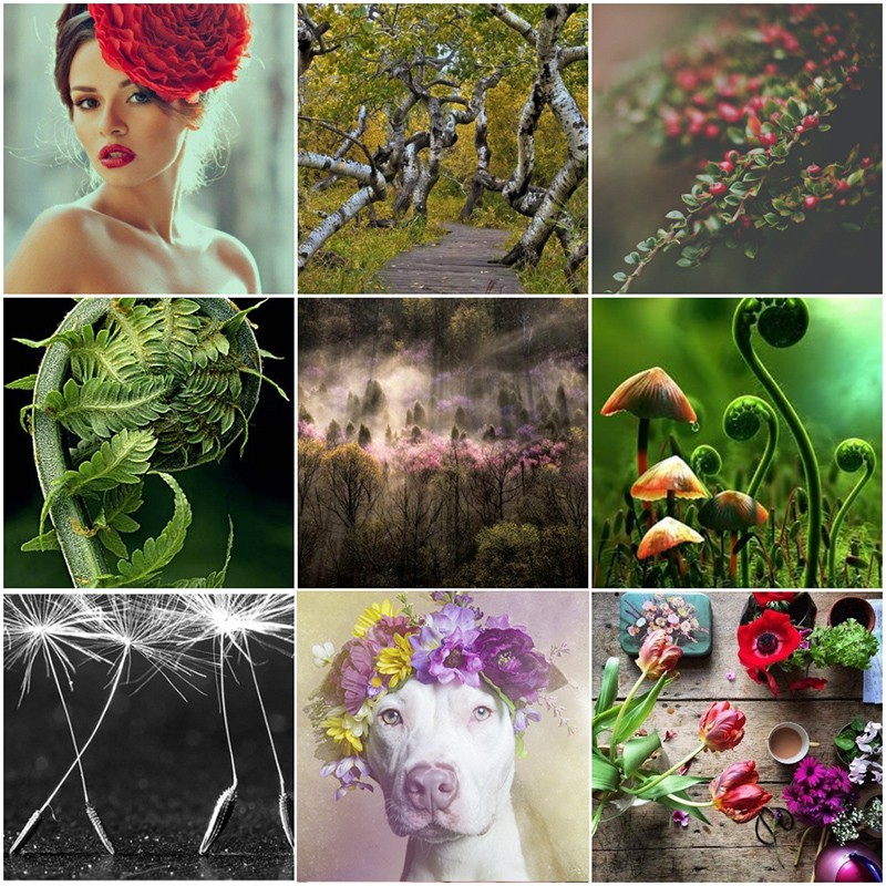 collage_photoмсчяcat