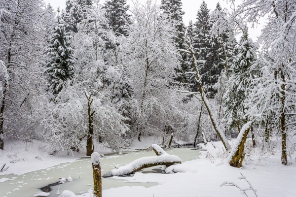 В лесу после сегодняшнего снегопада