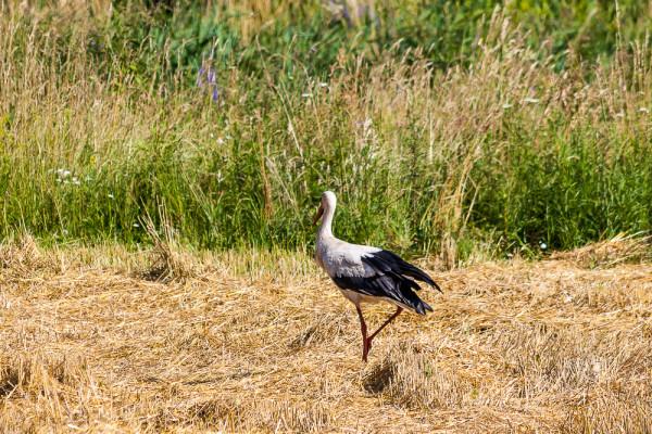 Животный мир Рогознянского озера. Брестская область