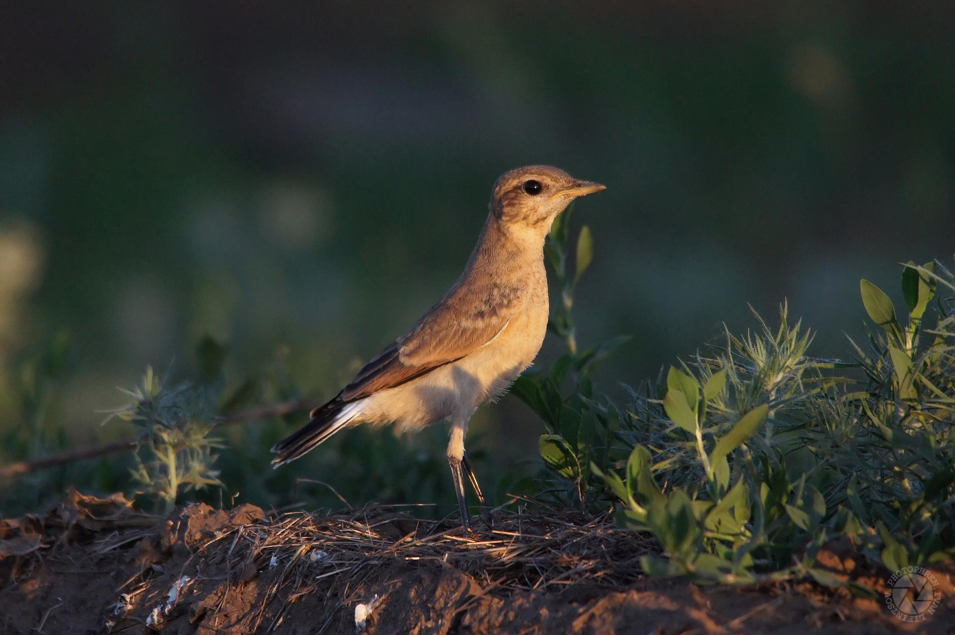 кредитные птицы волгоградской области фото и названия прорезавшийся зубик