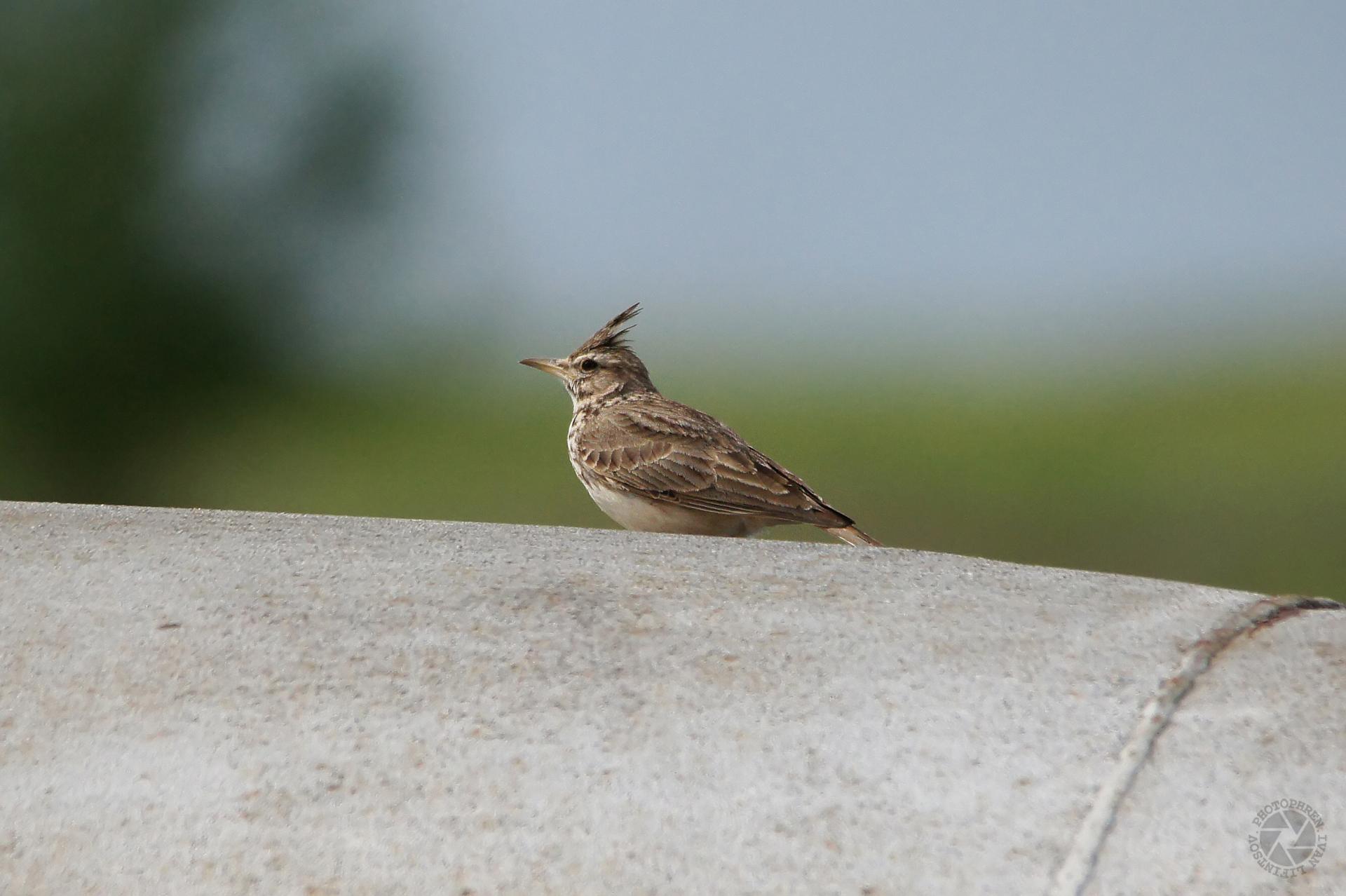 Хищные птицы волгоградской области