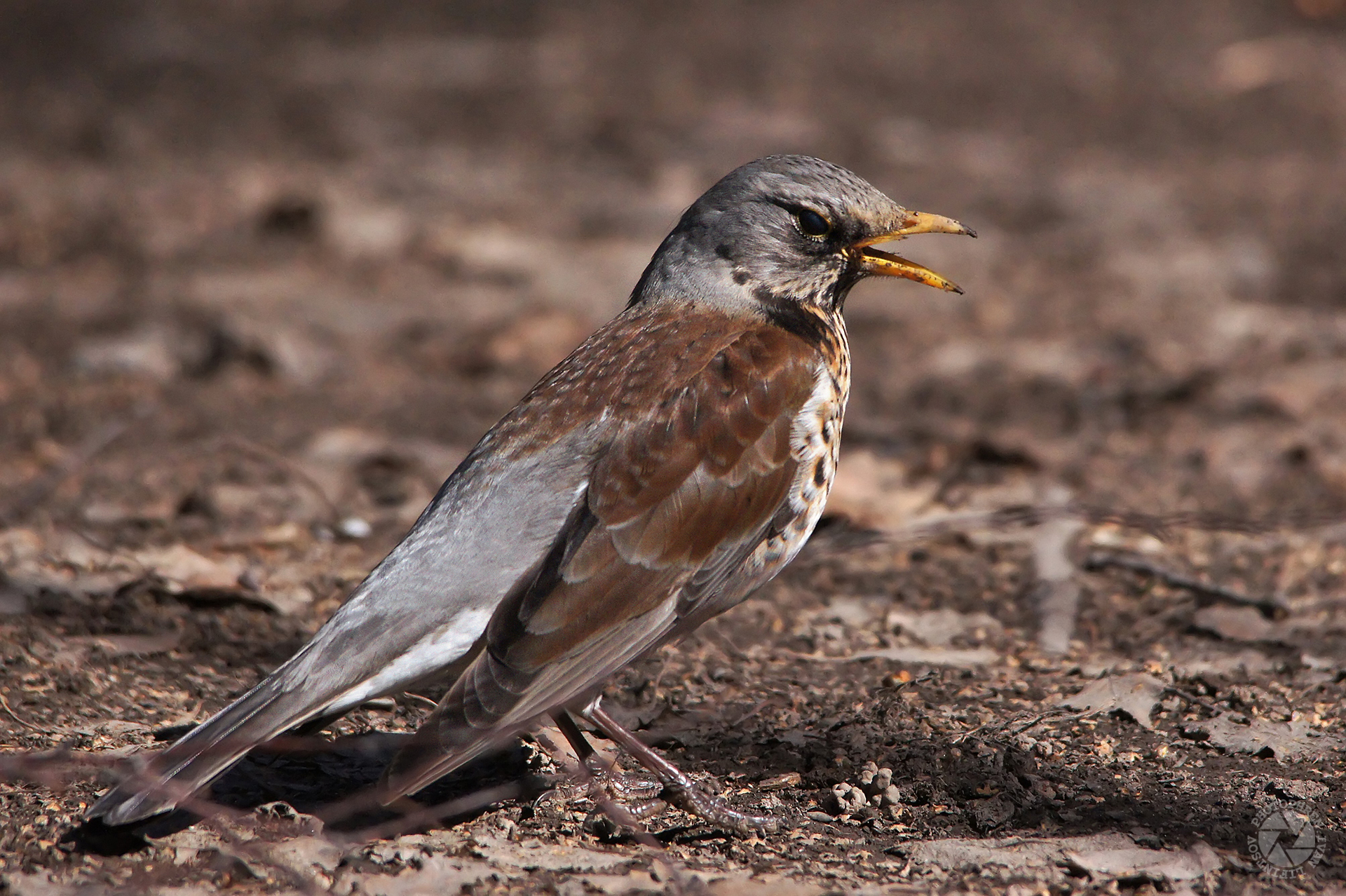 меня вдохновляют что за птицы появились в москве фото фото сувенирах, высокое
