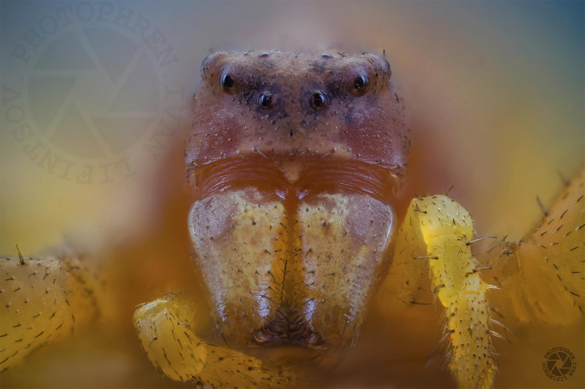 pauk borohod (3).jpg