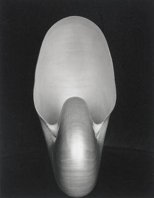 Edward Weston. Nautilus Shell, 1927