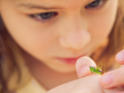 Young Entomologist.