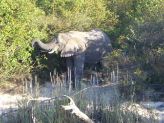 Elephants along the Zambezi