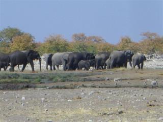 Family of elephants at Elephant Hole