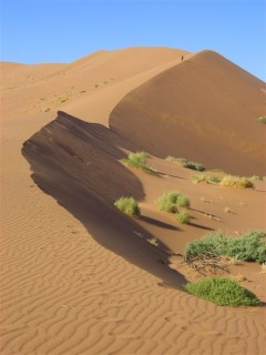 Over the dunes and through the dunes goes Mad Mardigan to Dead Vlei