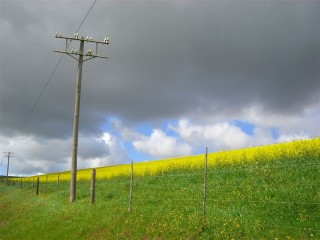 Vibrant fields of Gold along the SA countryside.