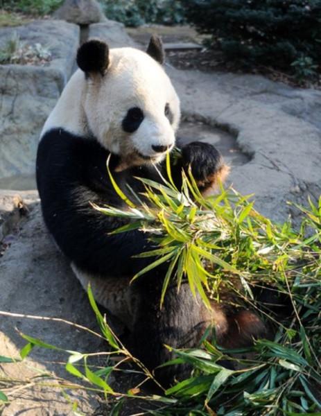 Бамбук в попе фото — 6