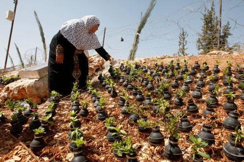 palestine bomb garden