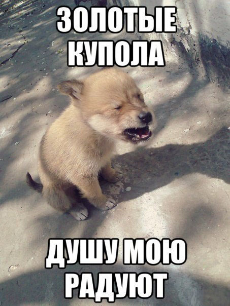 собака шансон