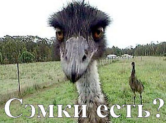 страус - гопник