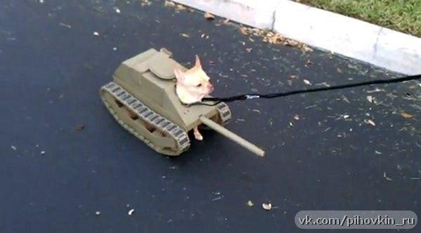 костюм танка