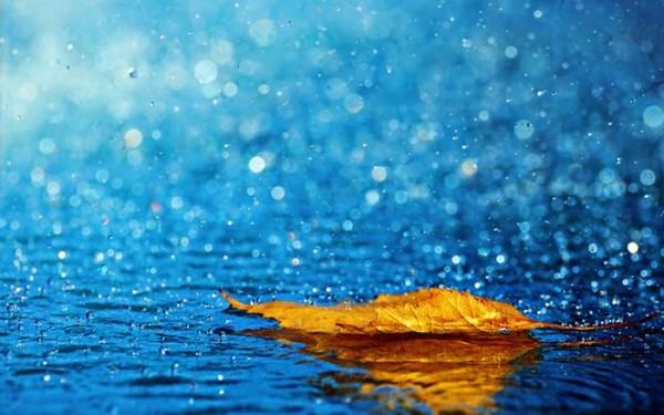 дождливые фотографии