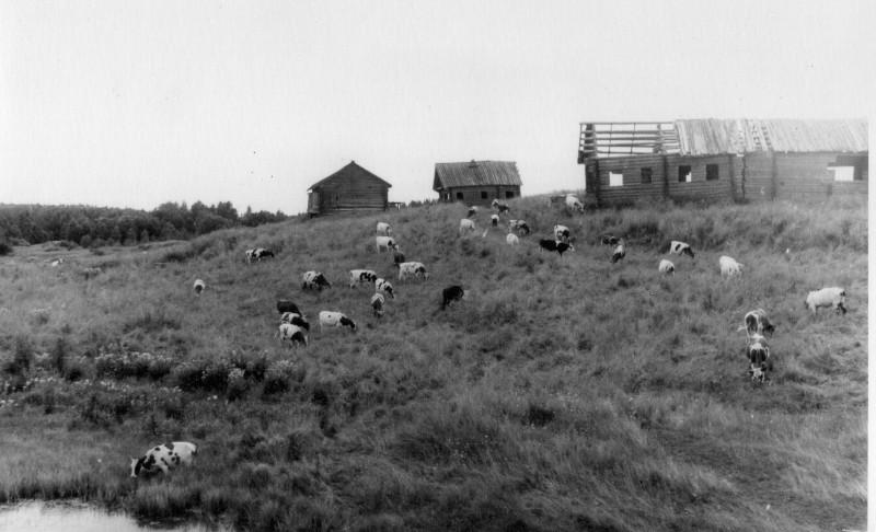 Деревня Погост или Ермолаевская на Куштозере. В 1982 году была уже заброшена, но на Куштозере ещё пасли колхозный скот. Фото В.К. Тарасовского (1982)                                                                                                                                       Источник фото: https://vk.com/bookmarks?w=wall-1549910_142709%2F505acc78f2b036cc9b (группа «Настроение – Моя Вытегра»)