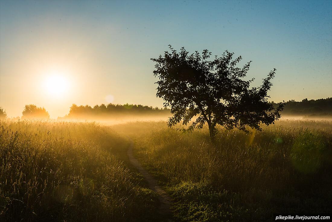 Рассвет в Битцевском лесу