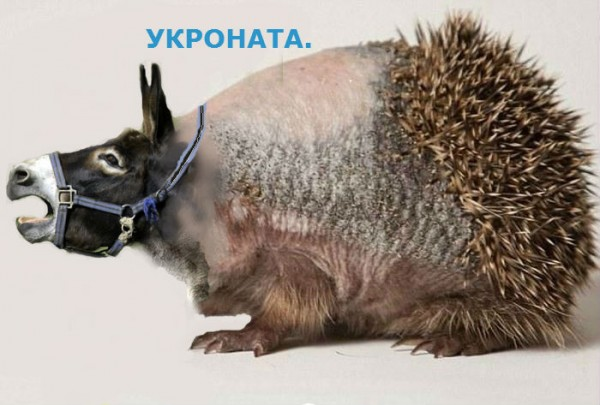 УКРОНАТА1