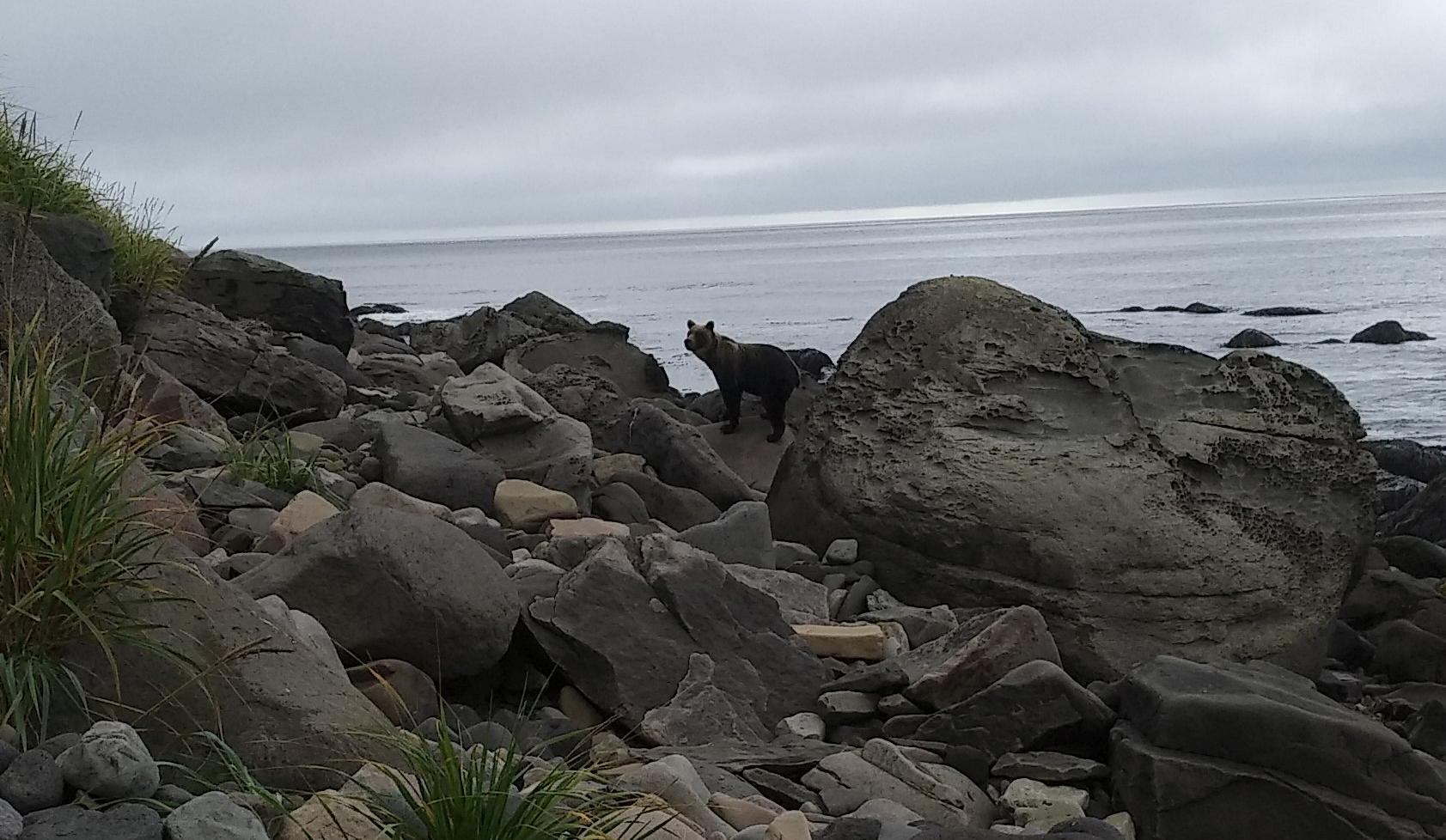 медведь на острове Итуруп 2020