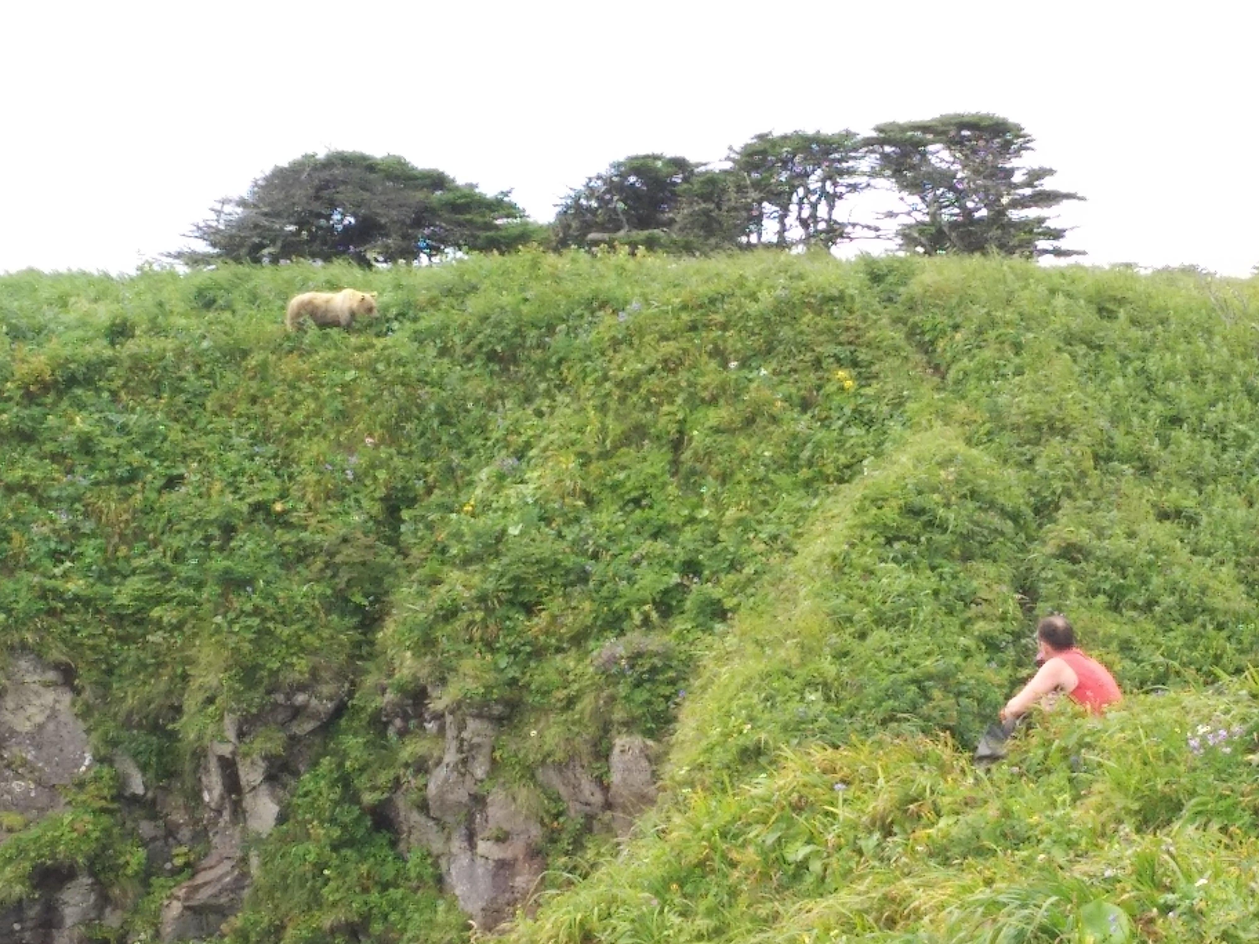 второй медведь на итурупе фото