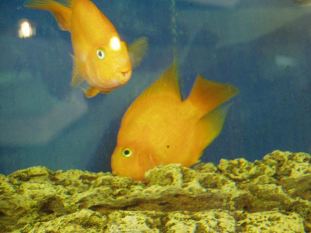Обитатели гостиничного аквариума