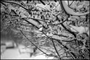 zima-01