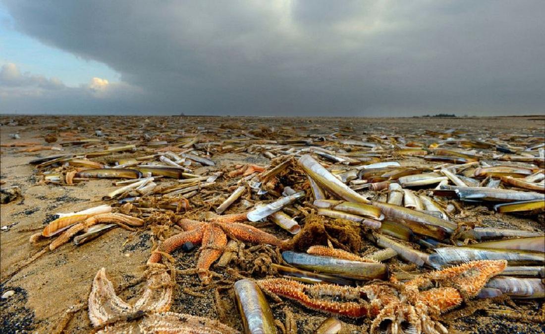 Фото бедных морских звезд