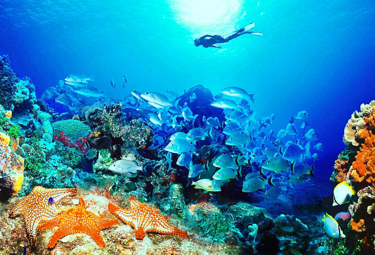 богатая жизнь в океане
