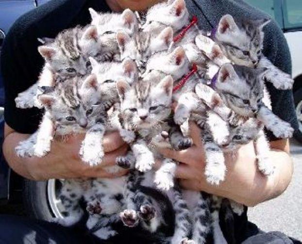 Букет котов