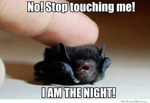 stop-touching-me-i-am-the-night