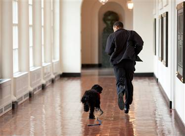 president and puppy