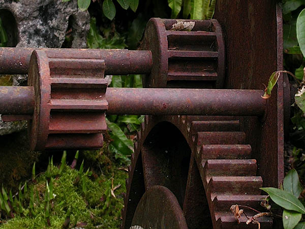 large, rusty gears lying in moss, starting to be overgrown