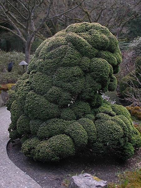 tree shaped like a giant broccoli