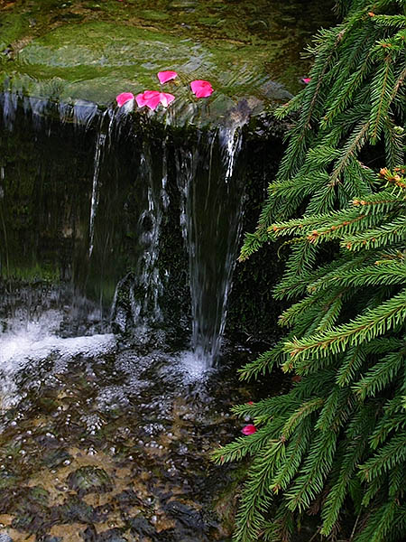 tiny waterfall with green creeping pine on the right, and several red leaves floating at the stone lip above the fall