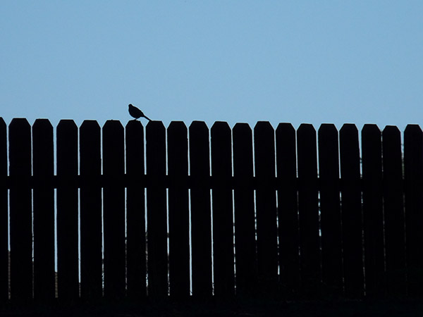 bird silhouetted on picket fence against blue sky
