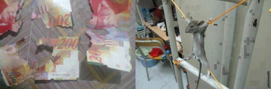 Житель Газы распял мышь за то, что она сгрызла три купюры по 200 шекелей