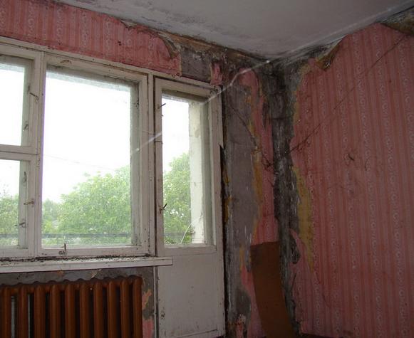 плесень в старом доме
