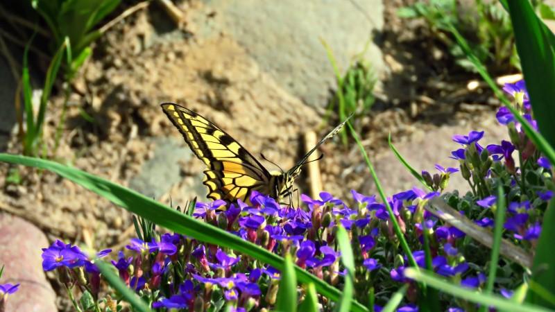 Бабочка Людмилы