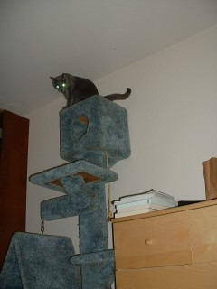 It's the top! From here I can mind-control everyone with my glowing eyes!
