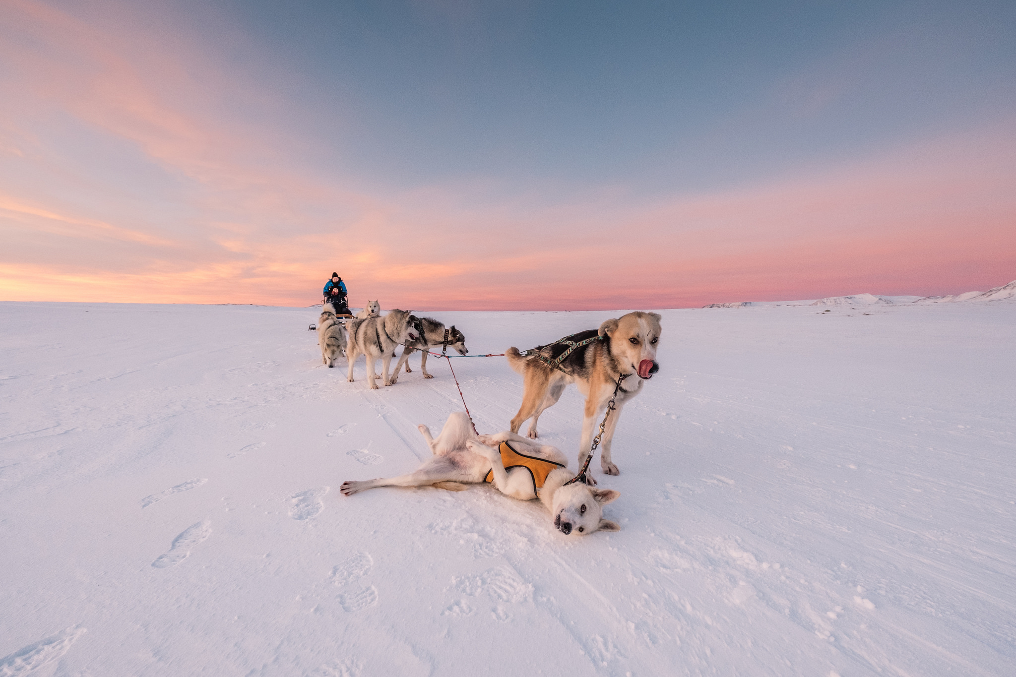 Chris Foster - Dogsledding Iceland.jpg
