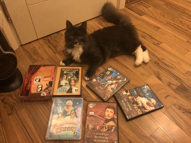 Много замечательных спектаклей по очень низким ценам можно купить на озоне на DVD.