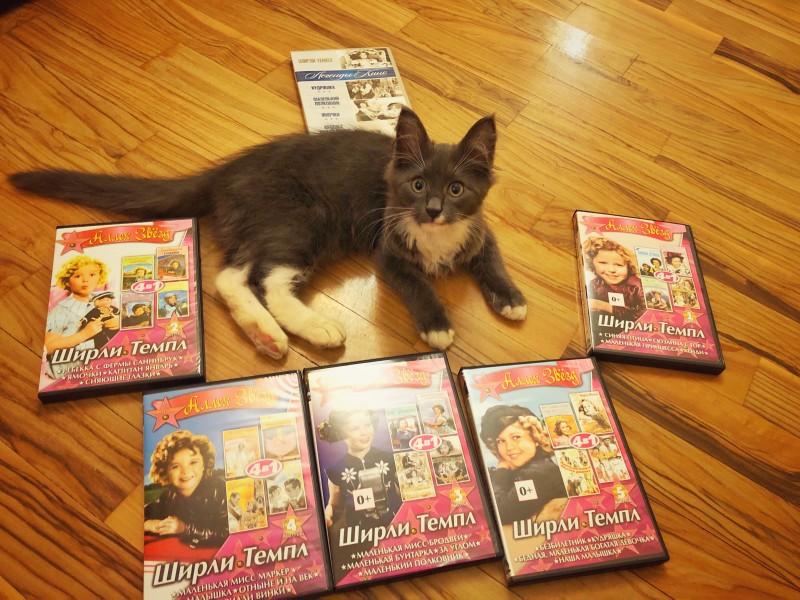 Моя коллекция фильмов Ширли Темпл и мой котофей Танос.