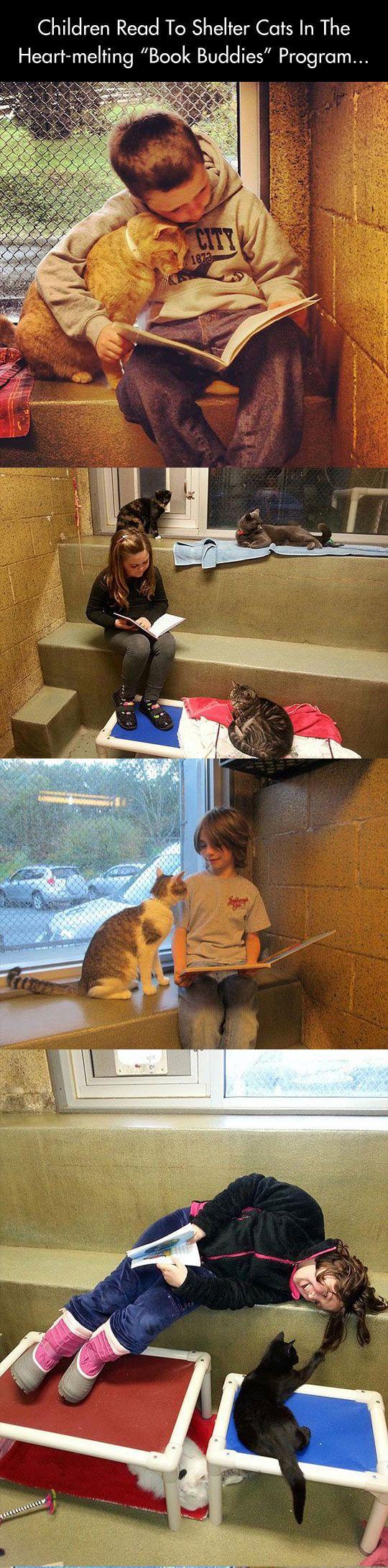 На западе есть даже специальная программа для детей, когда они приходят в приют для кошек и читают им детские книжки.