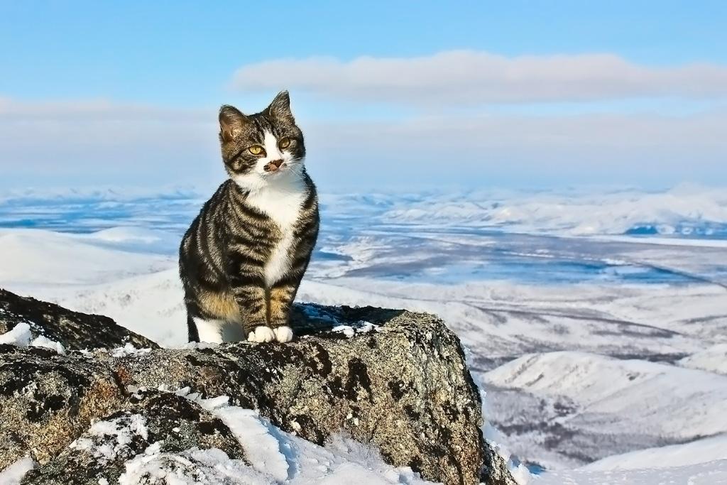 кот в горах