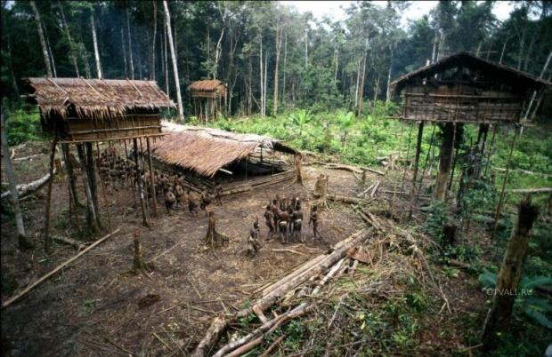 plemja-zhivuschee-na-derevjax-v-zapadnom-papua-indonezija_27788_s__1