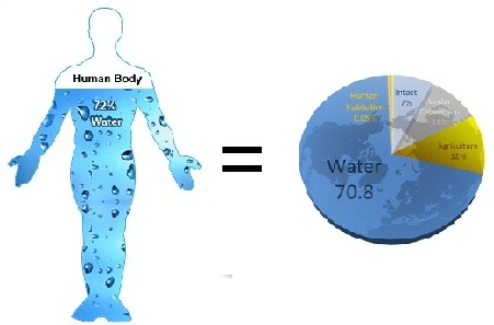 human-body-water-composition
