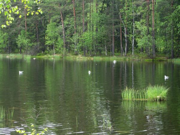 Озеро Тарасовское (Белянское) - одно из самых красивых озер ...